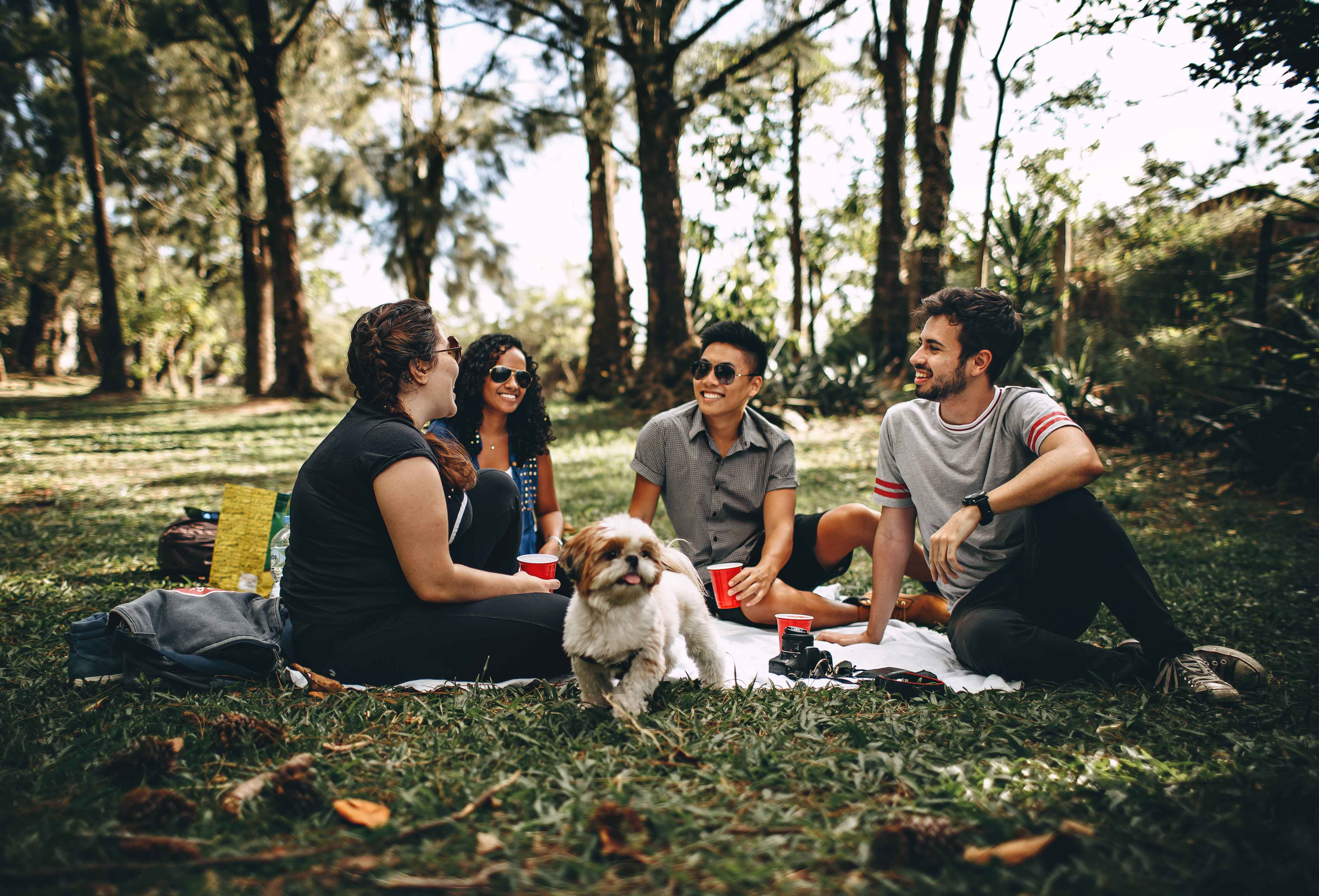 Four people sitting on a blanket on the grass, enjoying a picnic and a cute dog
